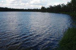 Dzūkijo nacionalinio parko ežerai - Dzūkijos uoga