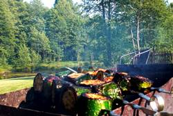Sodyba su maistu - cukinijos ant žarijų - Dzūkijos uoga