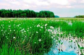 Dzūkijos nacionalinis parkas-čepkeliai