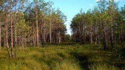 Dzūkijos nacionalinis parkas- čepkeliai