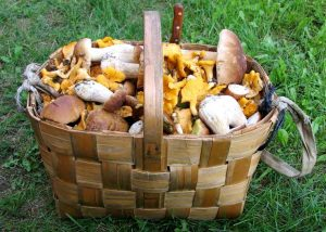 Mushroom hunting in Lithuania