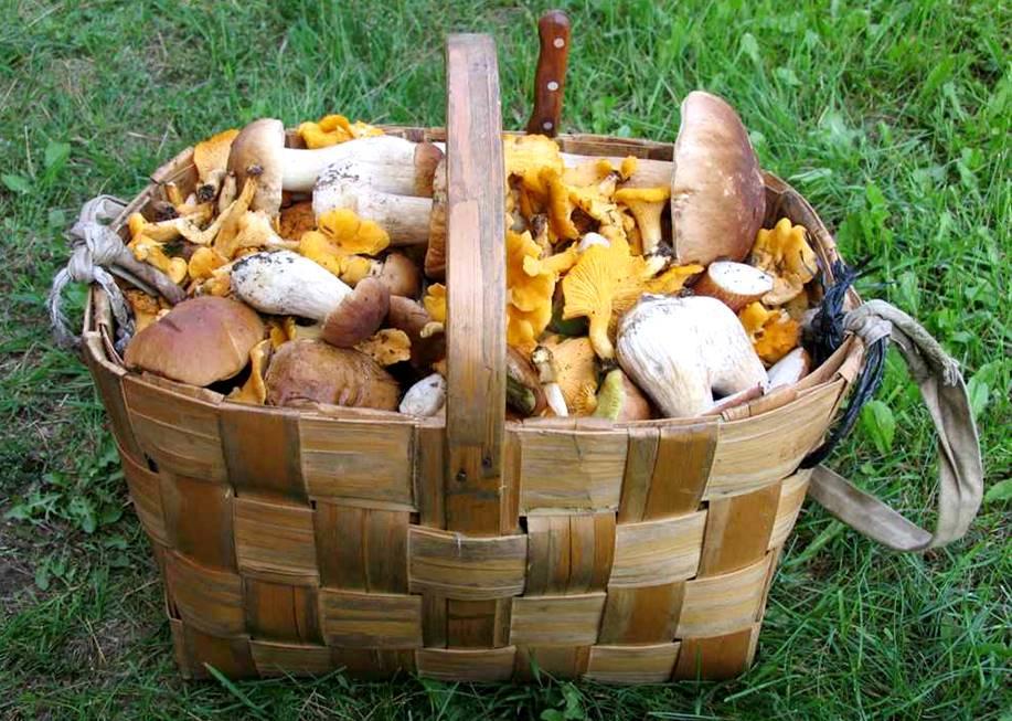 Mushroom hunting in Lithuania
